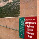 georgetown bighorn sheep viewing area colorado