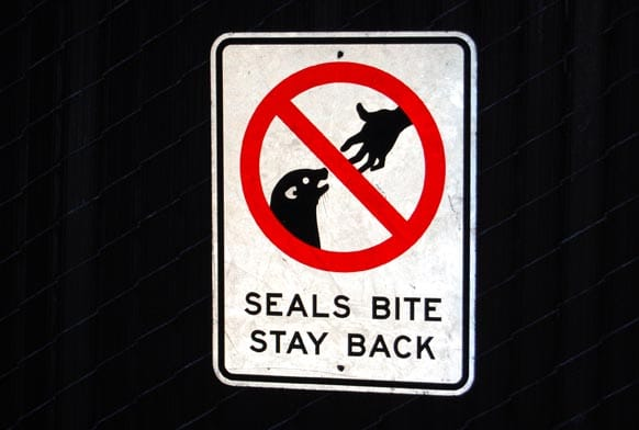 seals bite sign la jolla