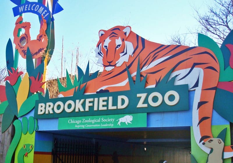 brookfield zoo vs lincoln park zoo