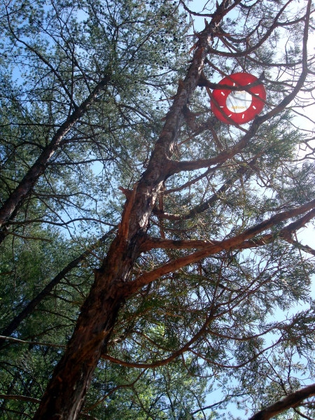 disc in tree