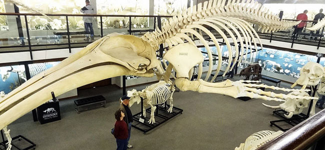 Quirky Attraction: The Museum of Osteology