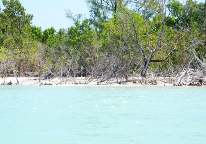 Discovering the remote beaches of Cayo Jutias in Cuba