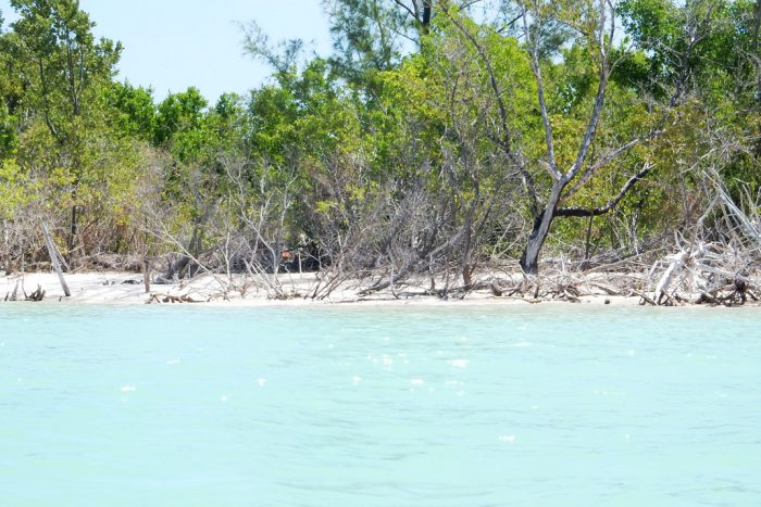 featured cayo jutias