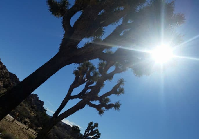 One Day in Joshua Tree National Park: A Suggested Itinerary