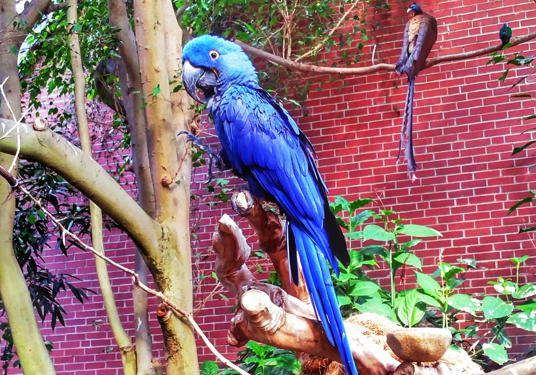 Quirky Attraction: The National Aviary in Pittsburgh