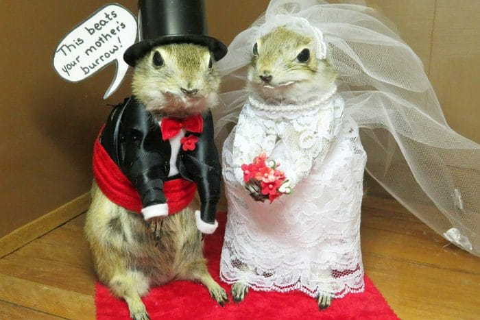 gopher wedding