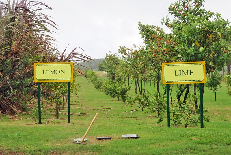 dole farm lemon lime fields