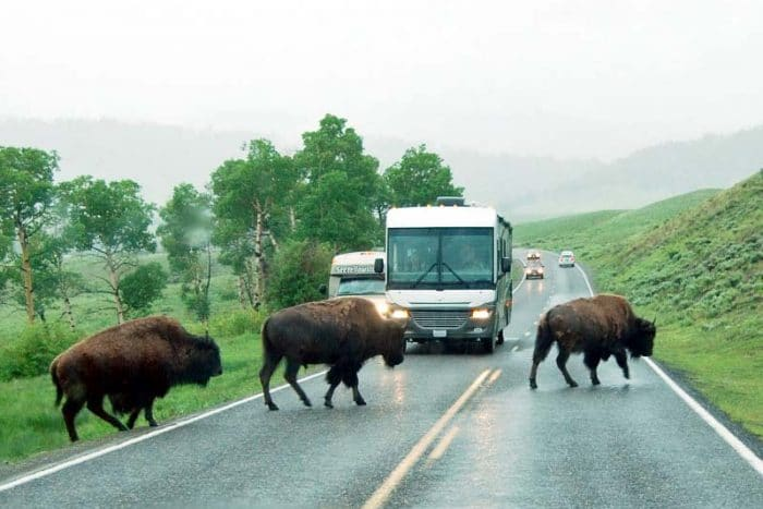bison cross road